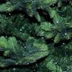 christmas-tree-3860669_960_720.jpg