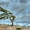 сильный ветер.jpg